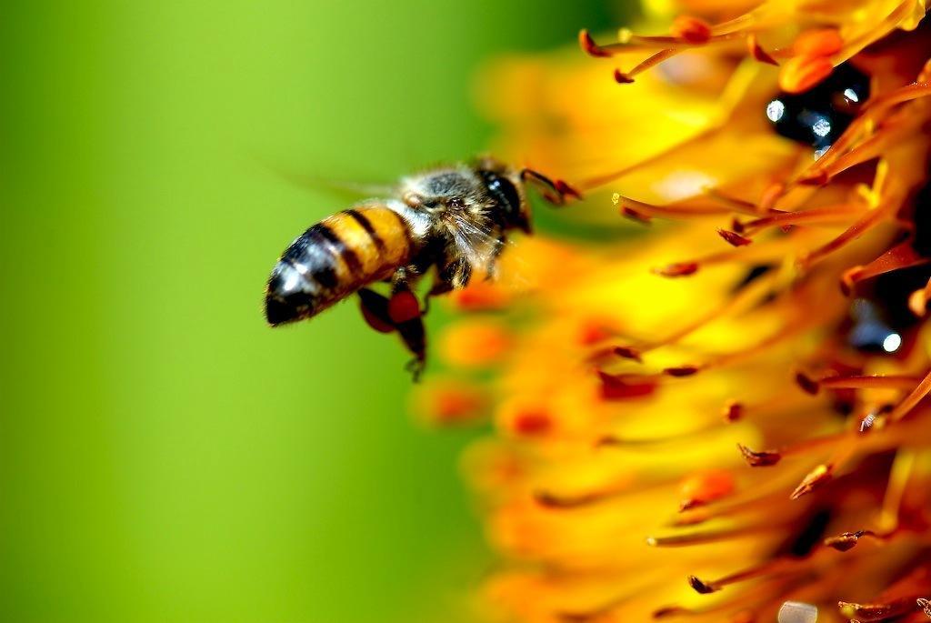Картинки анимашки с пчелами